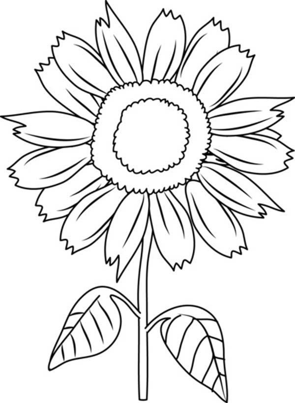 Beautiful Sunflower Coloring Page Download Print Online 1