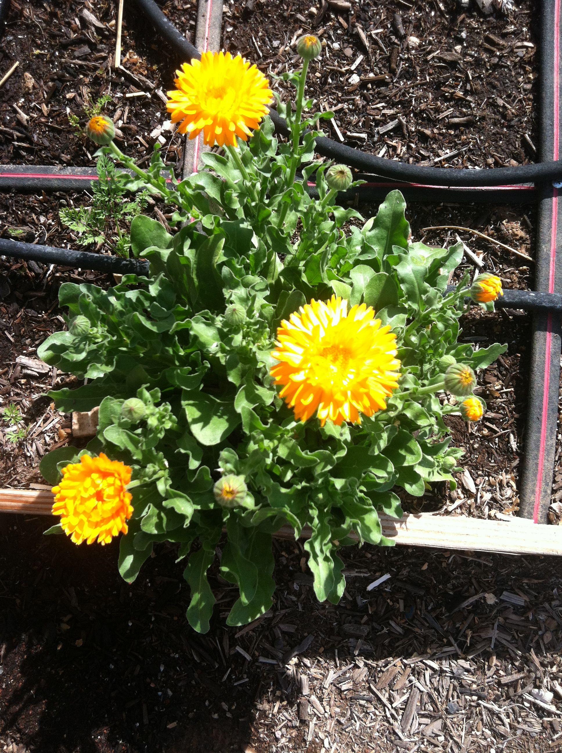 Pin on Flowers / Gardening
