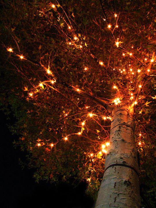 Tree With Orange Lights
