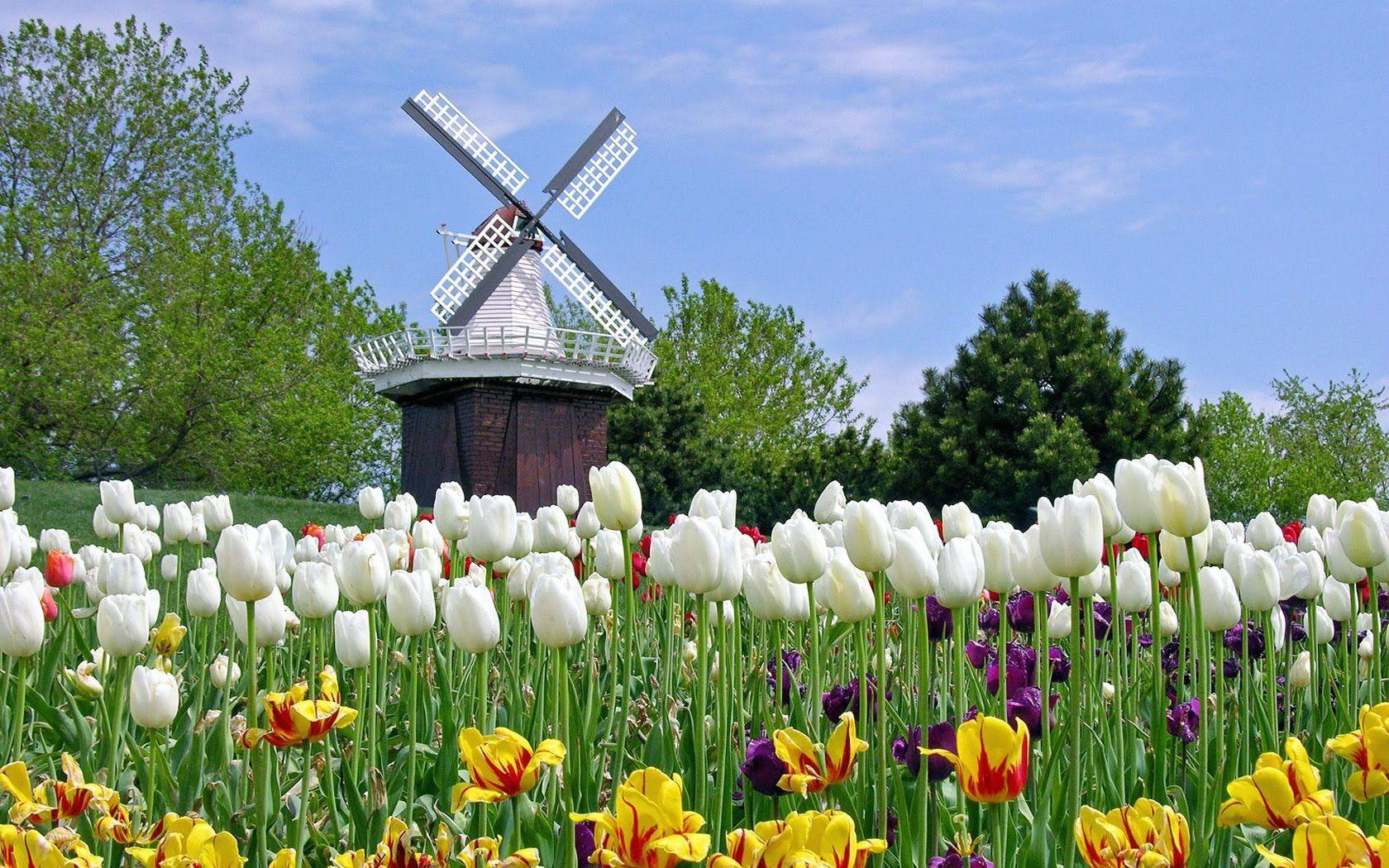 Keukenhof Gardens World Beautiful Flowers Tulip Garden 1080hd