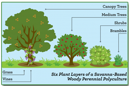What Is Restoration Agriculture Perennials Permaculture Edible Garden