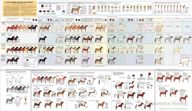 Guide To Horse Colors And Patterns Poster By Joumana Medlej Horse Color Chart Horse Coloring Horse Coat Colors