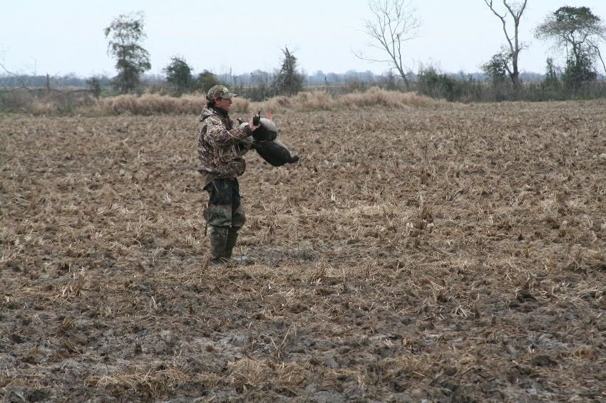 Guide Jordan Ardoin picking up the decoys. Unlike snow goose hunting, small spreads of 5-12 decoys are used. Good calling is vital for attracting birds.
