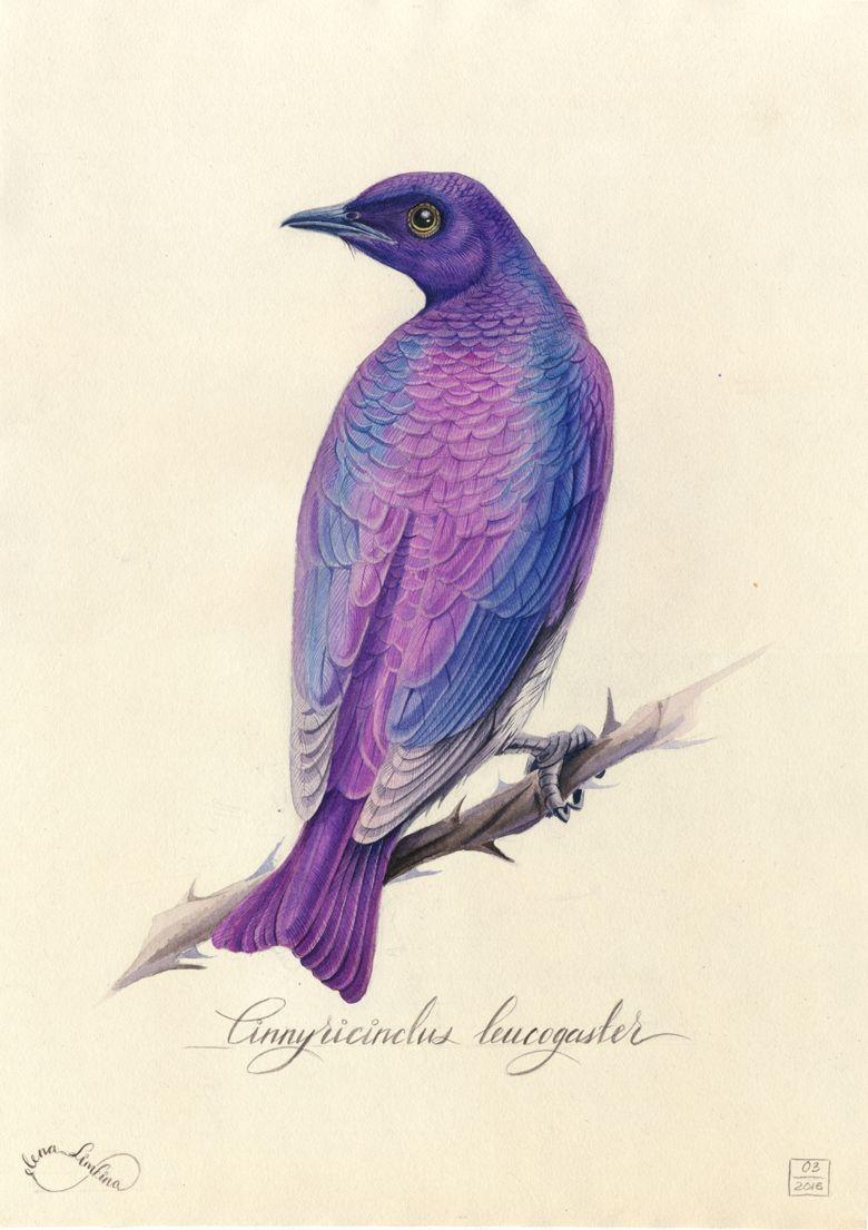 Watercolour Illustrations Of Birds Watercolor Bird Bird
