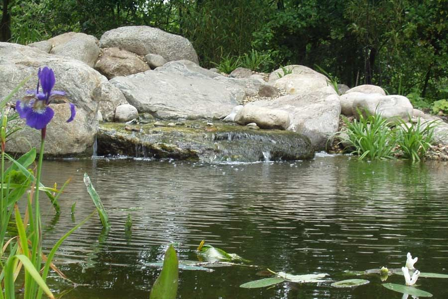 natural swimming pond designs gartenart usa - Garden Design Usa