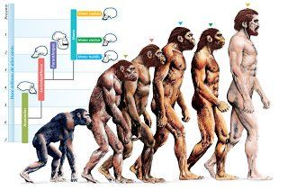 A Brief History of the Theory of Evolution This article presents a Brief History of the Theory of Evolution and its grounding bases.