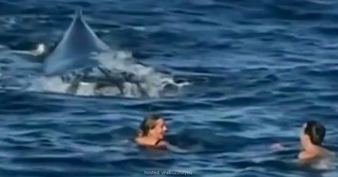 This Couple Was Swimming On A Placid, Beautiful Day In Australia Until They Heard Something Whine And Saw THIS