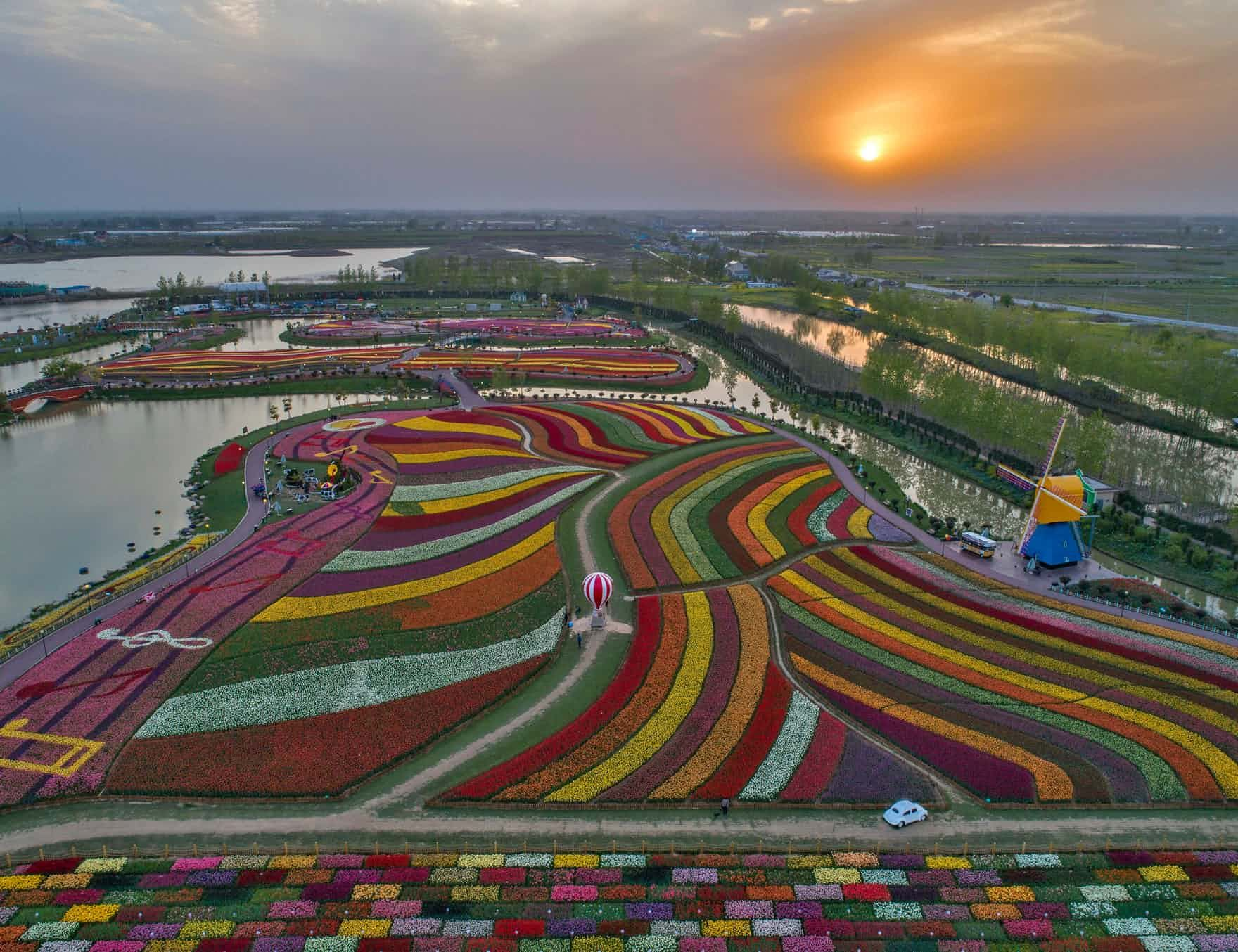 Monday S Best Photos Protests Around The World And Tulips In China Tulip Fields Around The Worlds Unusual Plants