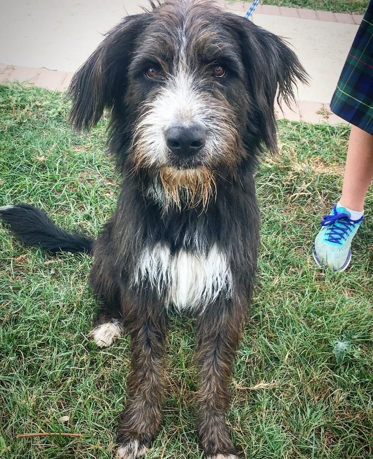 I Found Cody On Bearded Collie Bearded Collie Puppies Puppy