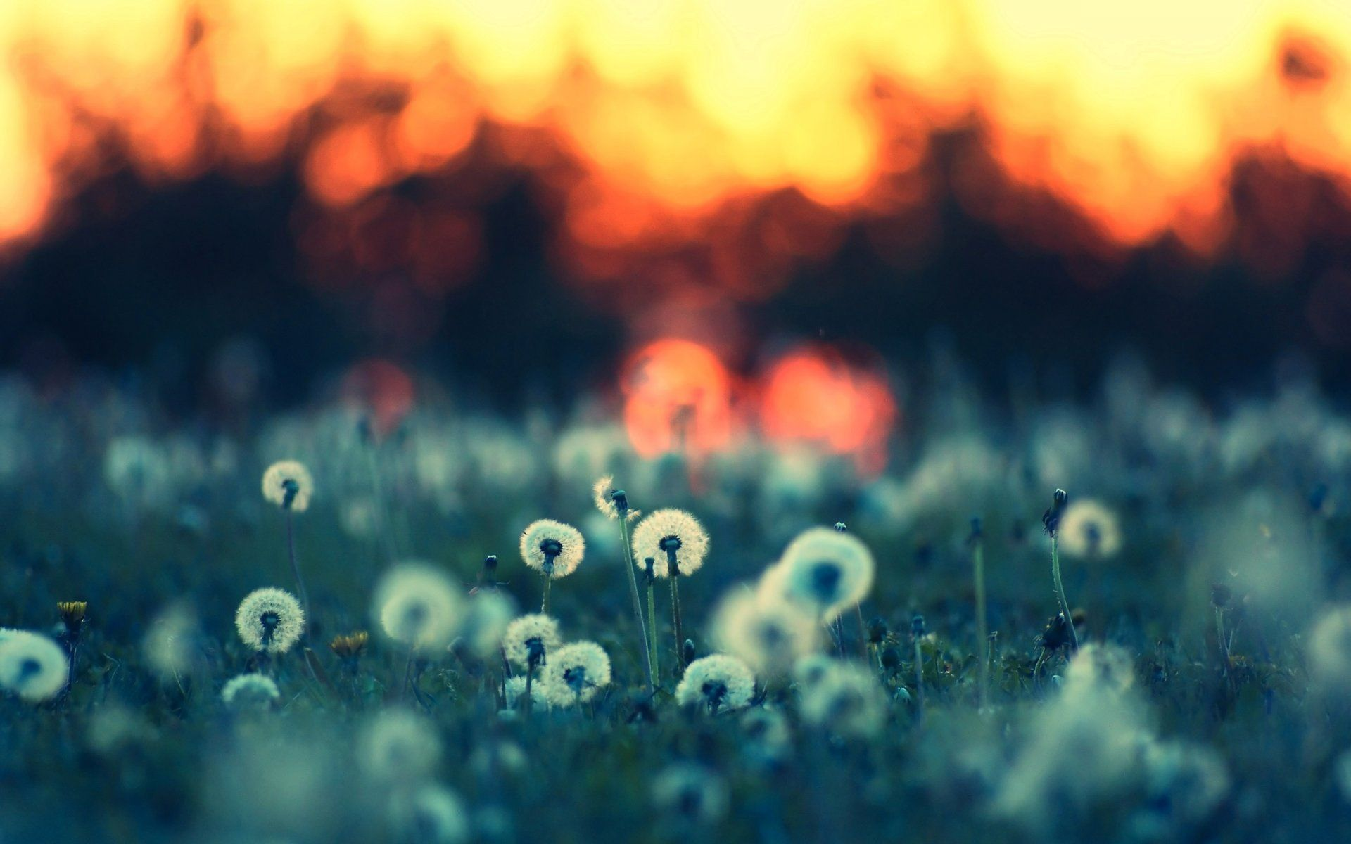Cute Summer Iphone Wallpapers: Summer Nights Wallpaper Widescreen With High Definition