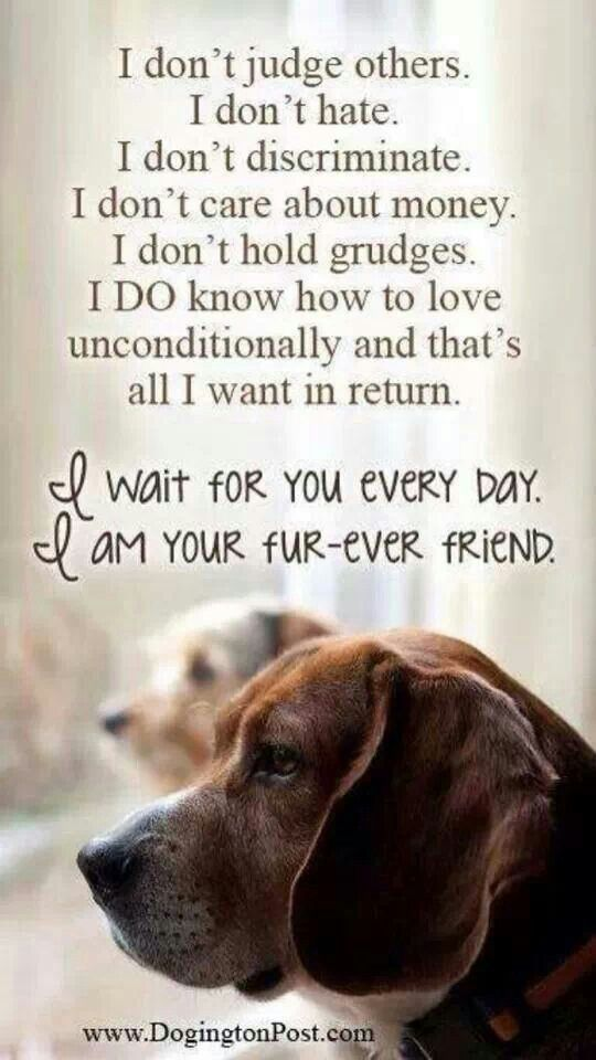 This Is Why I Love Dogs And What They Enrich My Life With They Can Inspire The Dogs Dog Lovers Dog Quotes