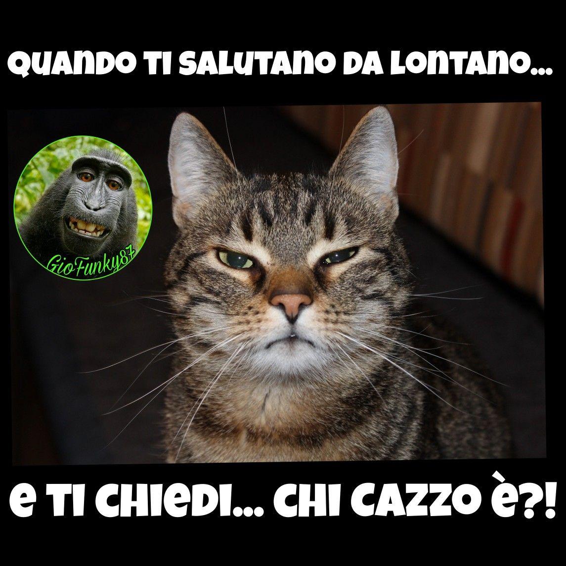 funny #joke #battute #risate #indovinelli #humor #battute  #immaginidivertenti #divertente #ri… | Immagini divertenti, Manifesti  divertenti, Vignette su gatti buffi