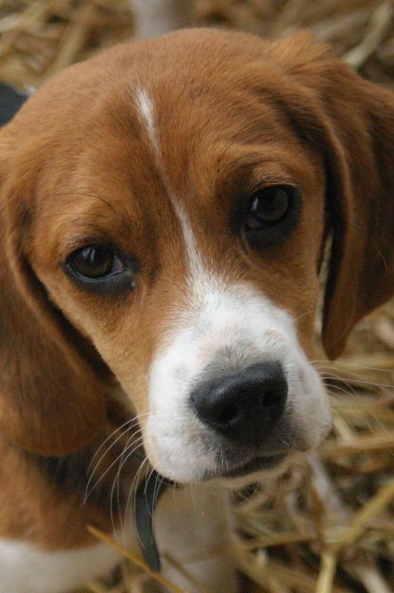Pin Von Monika Wiedemann Auf Hunde Jagdhund Welpenbilder Haustiere