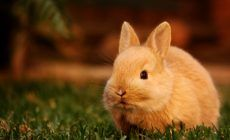 Bunny Wallpapers Images For Desktop Wallpaper 3126 X 2274 Px 209 MB Pattern Rabbit Puppy Tumblr Hd Animated Widescren