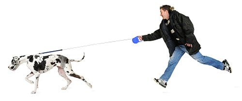How To Stop Your Dog Pulling On The Lead Great Dane Puppy Great