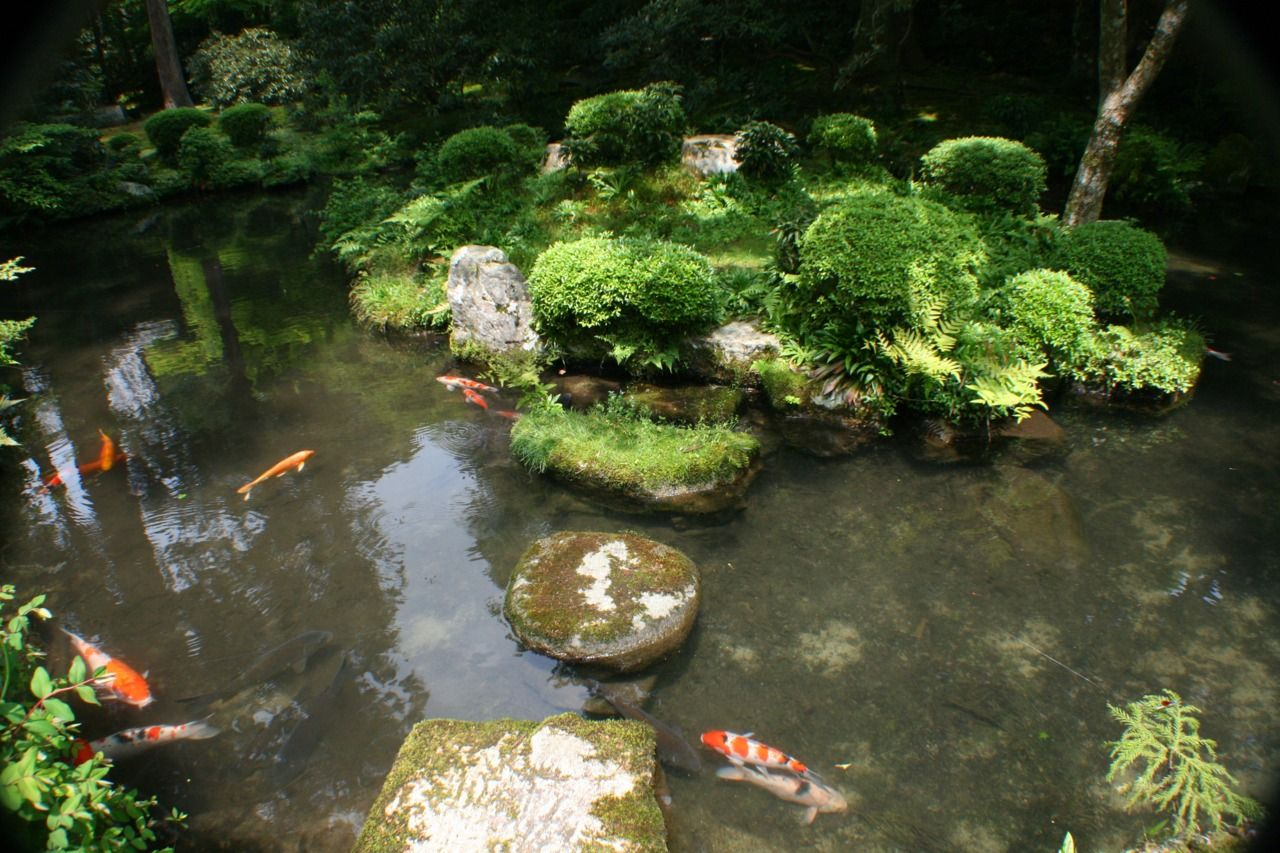 Koi pond at sanzen in in ohara japan japanese gardens for Japan koi pool