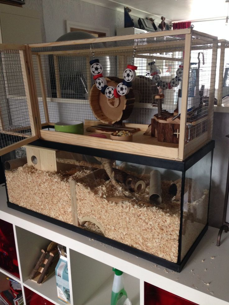 Image Result For 15 Gallon Gerbil Cage Hamster Cages Gerbil Cages Gerbil