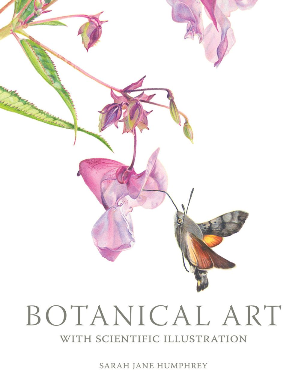 Botanical Art With Scientific Illustration Ebook Scientific Illustration Botanical Art Botanical Illustration