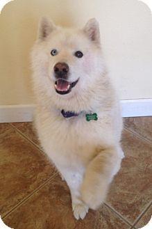 funny pet adoption