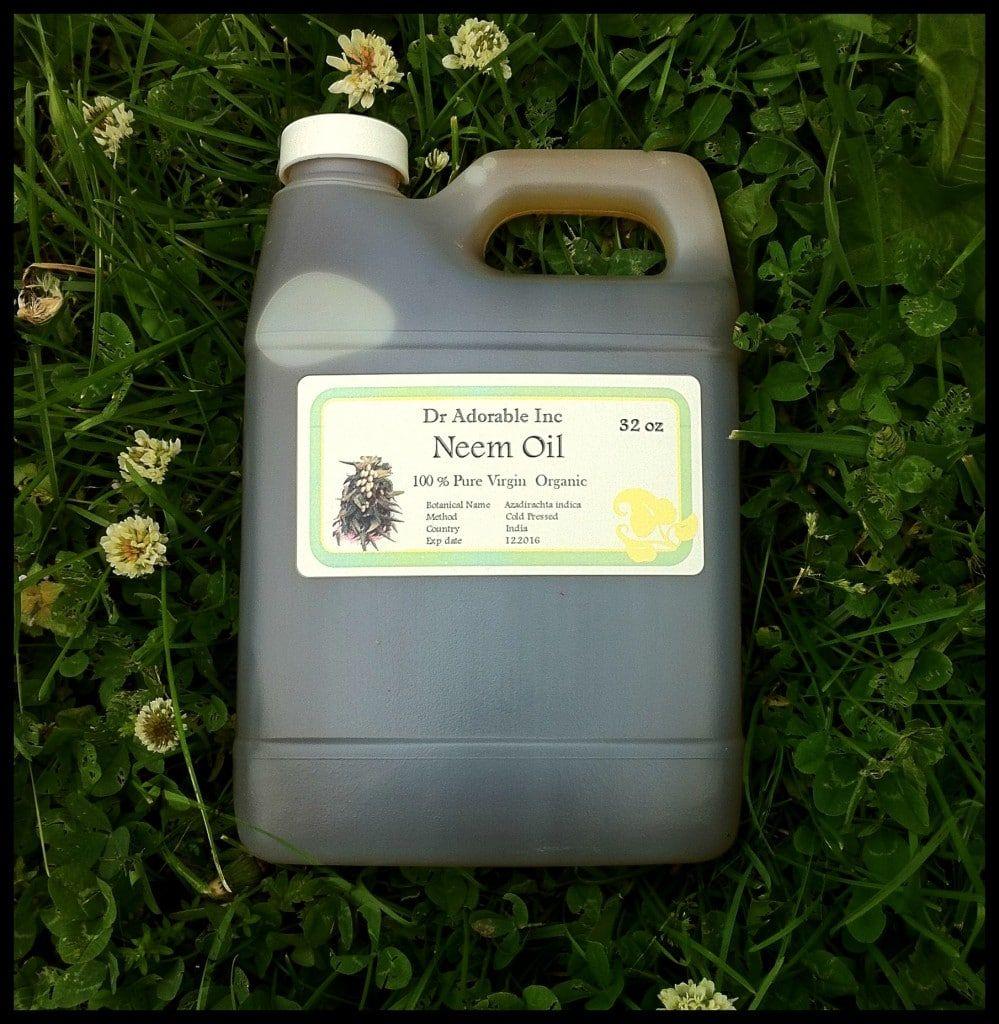 Non-Toxic DIY Neem Oil Pesticide