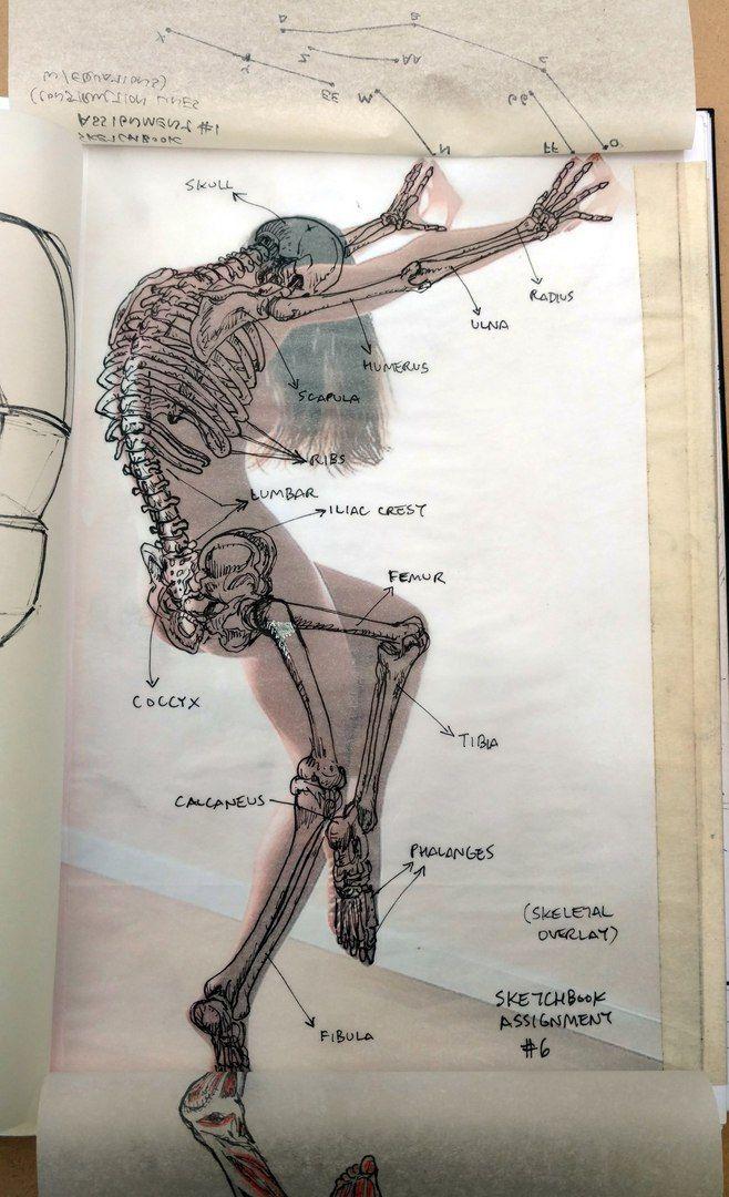 anatomy #figuredrawing #female   Anatomy study drawing   Pinterest ...