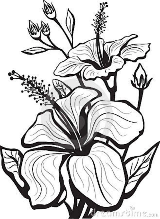 enredaderas de flores dibujos - Buscar con Google | negro sobre ...
