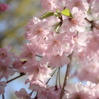 Spring in Japan: stitch by stitch
