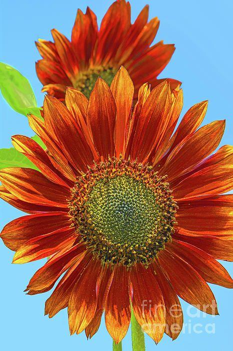 Pin By Regina Geoghan Photoart Decor On Flower Art