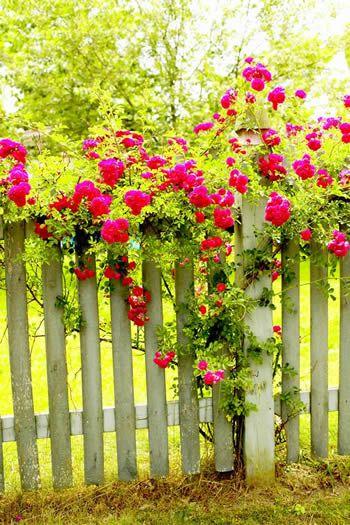 http://nethugs.com/wp-content/uploads/2011/03/flowers_fence.jpg