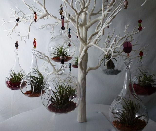 Tillandsien pflegen terrarien aufh ngen kunststoffbaum perlen wohnzimmer pinterest - Tillandsien deko ...