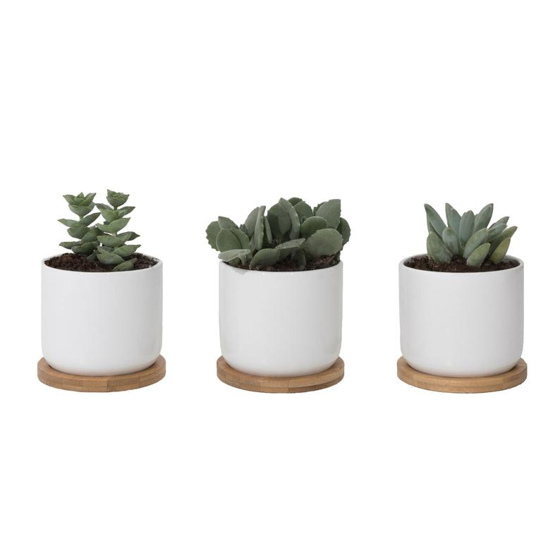 Set Of Three 4 White Ceramic Pots With Bamboo Trays Etsy Small Flower Pots Small Potted Plants Flower Pots
