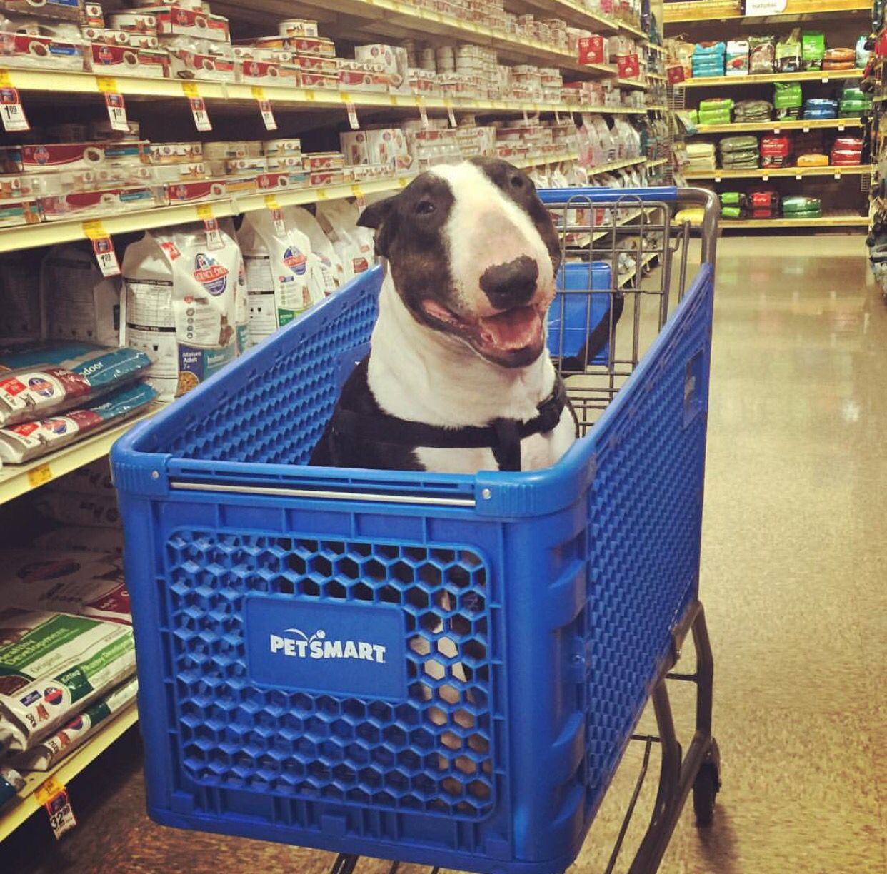 mom brought me to petsmart i u0027m gonna get some food and treats