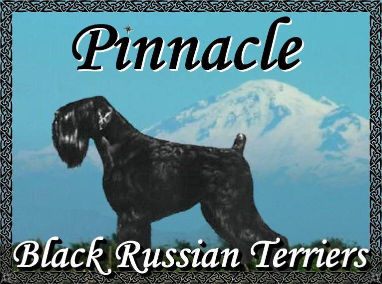 Pinnacle Black Russian Terrier Brt Breeder Washington Black