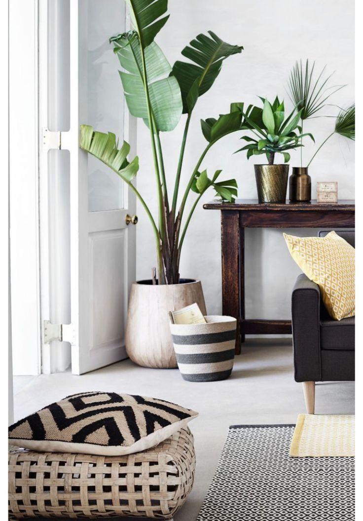 Living Room Plant. Verliefd op de bananenplant  Jij ook Plants In Living RoomLiving home Pinterest