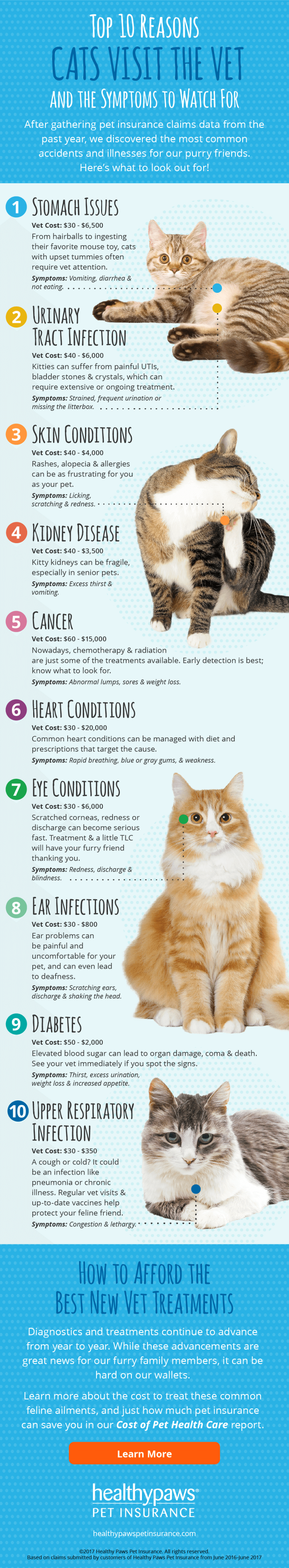 Top 10 Reasons Cats Visit The Vet Infographic Healthy Paws Pet Insurance Cat Fleas Treatment Homemade Cat Food Flea Remedies