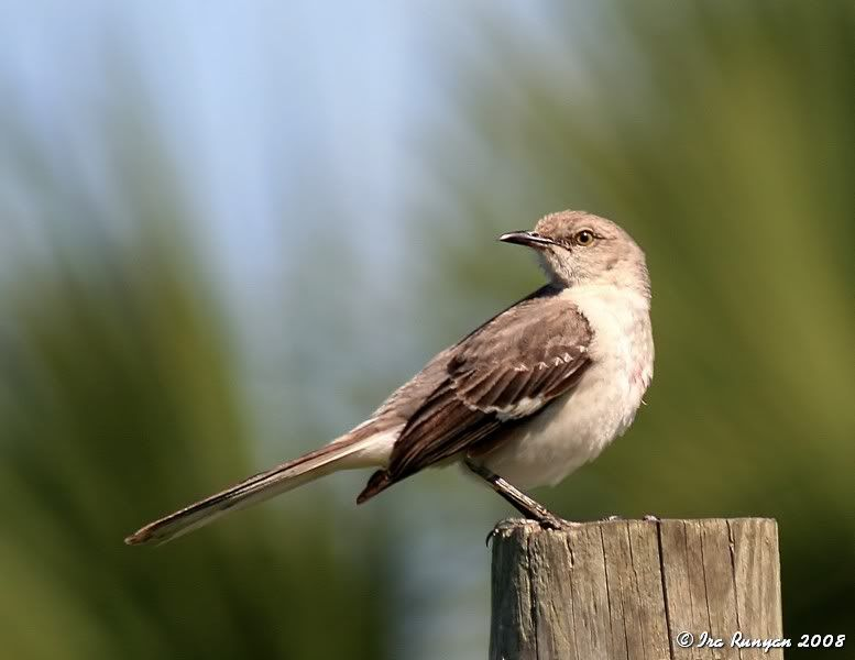 what is the florida state bird location brevard county florida