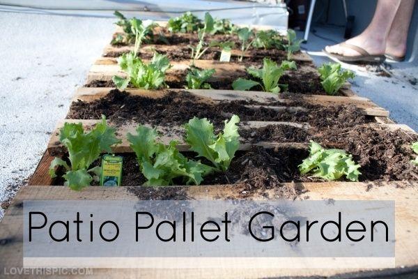 Patio pallet garden garden diy gardening diy ideas diy crafts do it patio pallet garden garden diy gardening diy ideas diy crafts do it yourself diy art garden solutioingenieria Image collections