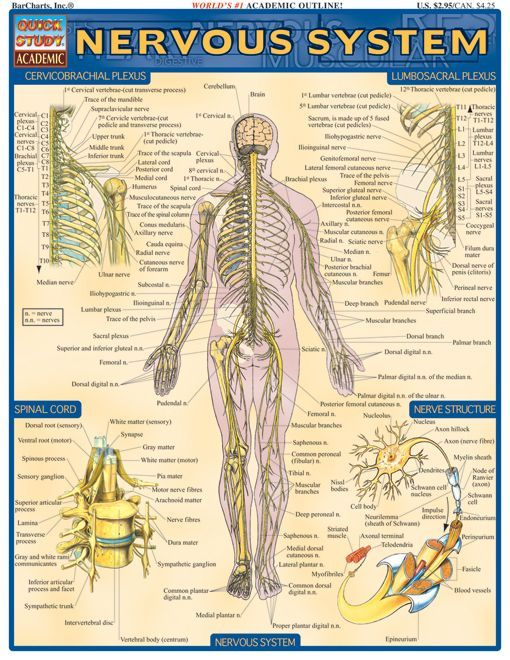 Importance of Immune Imbalance and Autoimmunity in Nervous ...  Major Nervous System Disorders