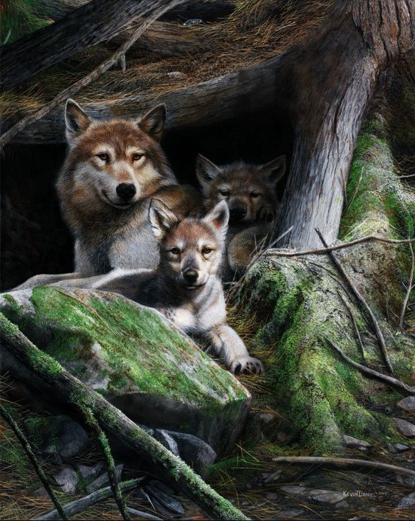 KEVIN DANIEL Animal drawings, Animal art, Wolf artwork