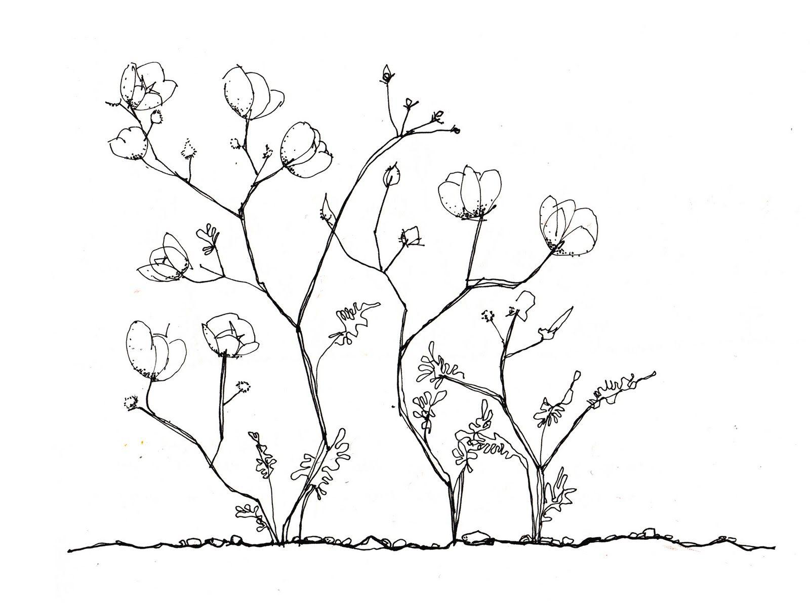 dibujo desierto florido  Buscar con Google  Interpretacin