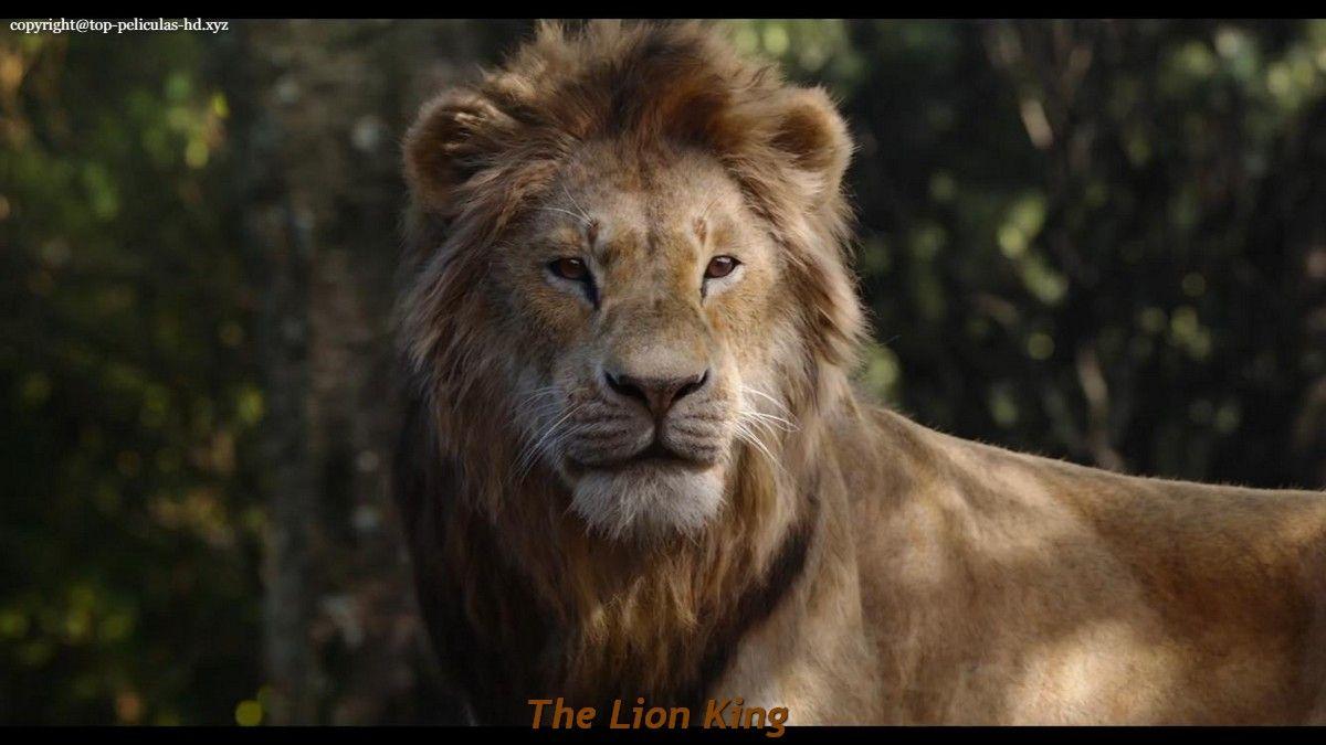 Pin On Lion King Drawings