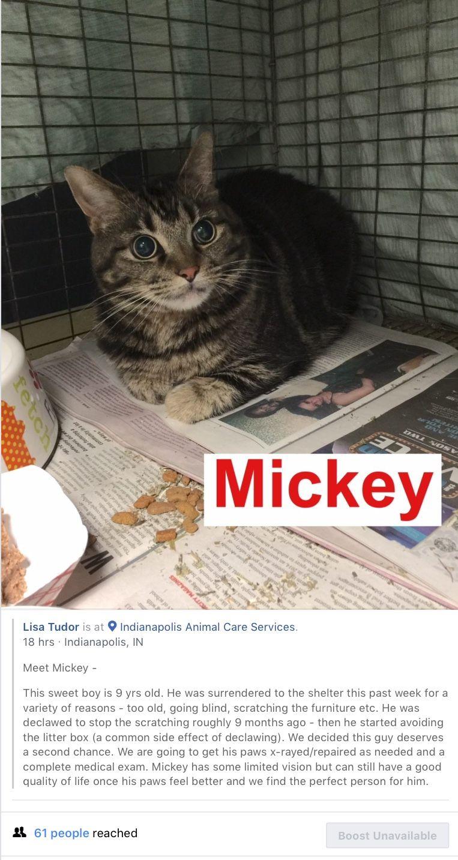 Veterinarian Declawed A Senior Cat You Sick Evil Monster May God