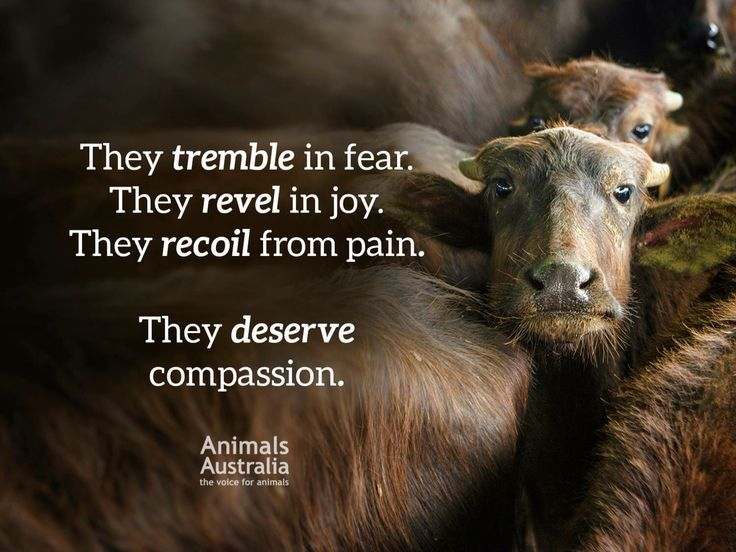 Pin by Choosing Compassion Over Cruel on Animal Rights