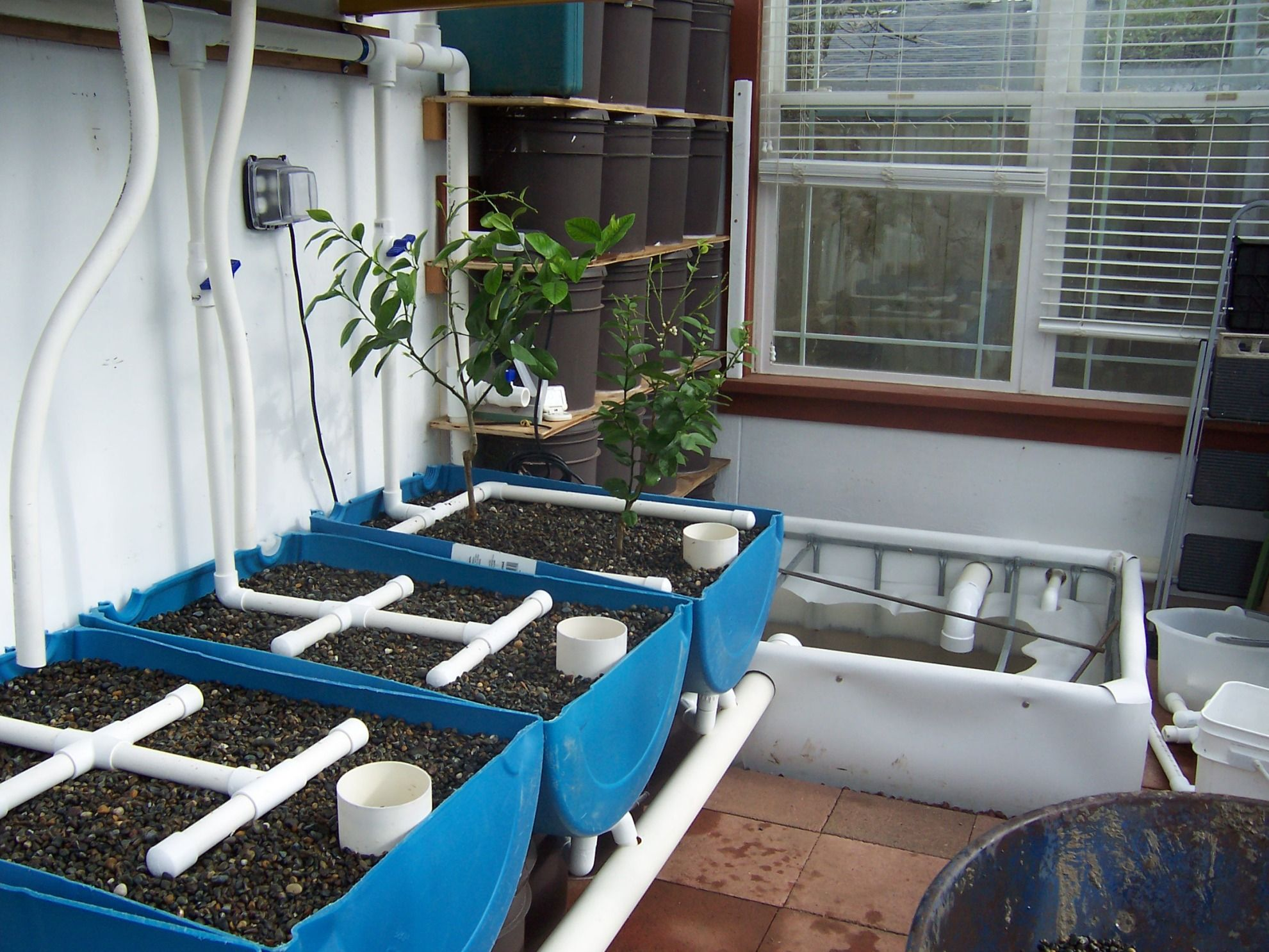 Grow Own Fish Use Water To Grow Plants In Blue Barrels Etc.kind Of Cool But  Weird, Brad Looking Into It!