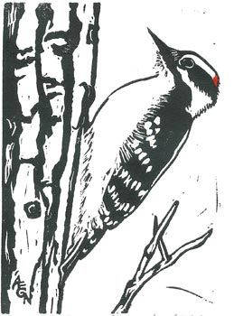 Downy Woodpecker Block Print In 2020 Linocut Prints Bird