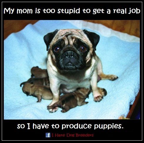 My Mom Is Too Stupid To Get A Real Job Buy Puppies Dogs Puppies
