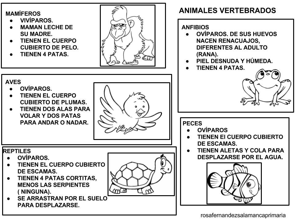 Clasificacion De Los Animales Vertebrados E Invertebrados Para Colorear Buscar Con Google Vertebrados E Invertebrados Animales Vertebrados Vertebrados