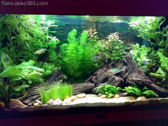 Pin Auf Hydroponic Plants