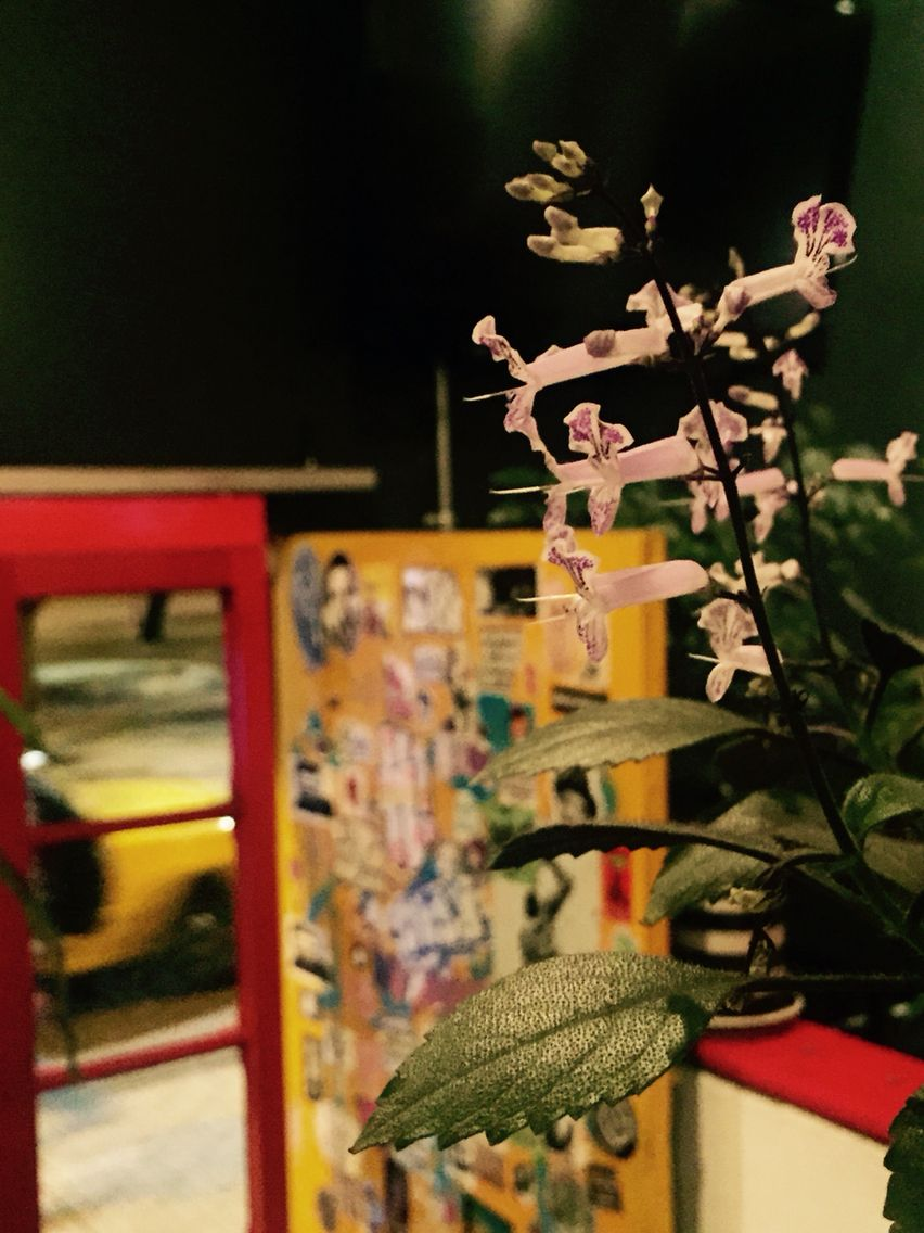 Las flores de Simone