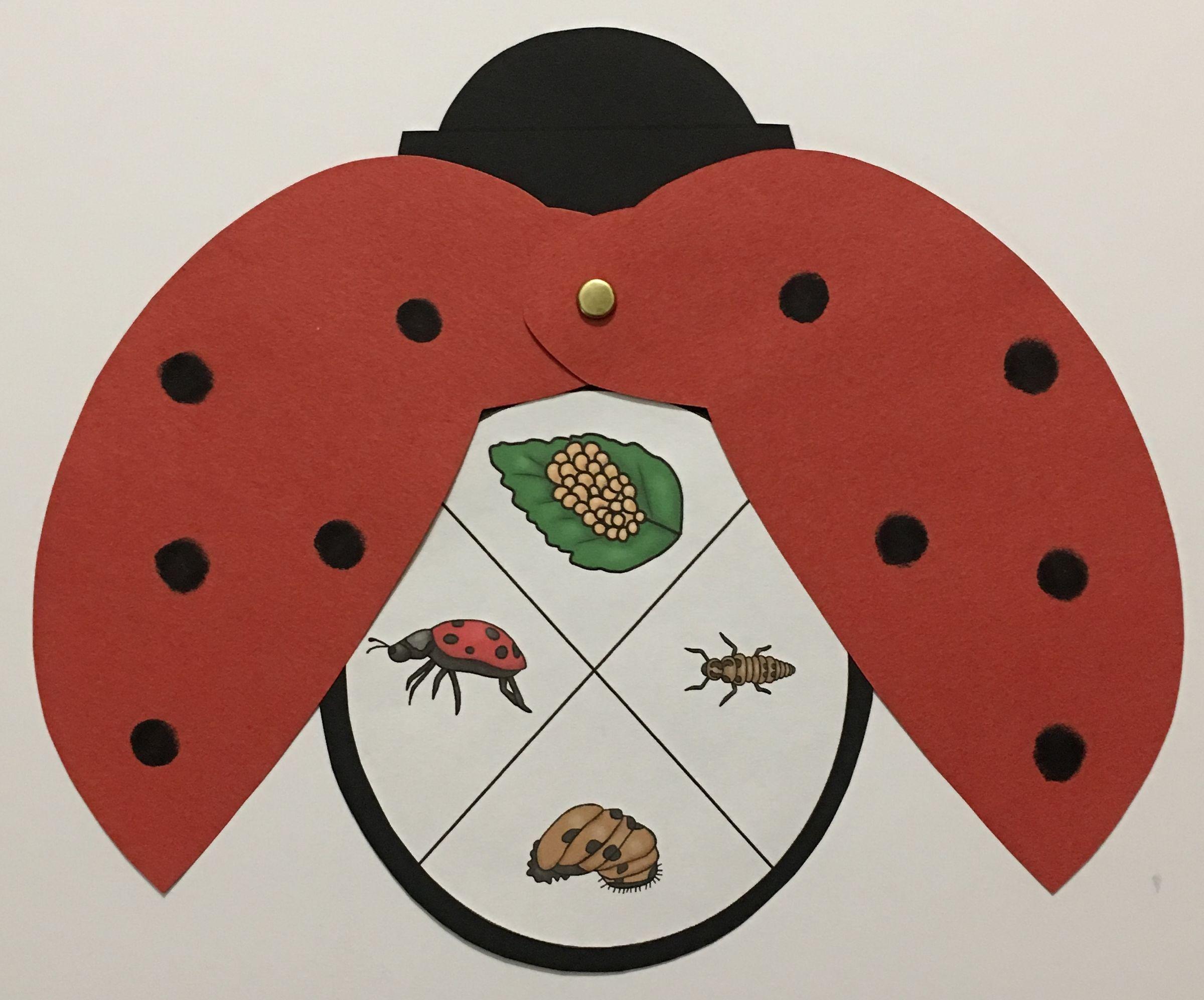 Ladybug Life Cycle Craft Life Cycle Craft Life Cycles Science